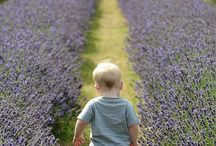 Lavender my love