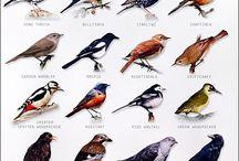 kuş Bird