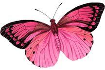 Mariposas bellas / Inspiración para mis tattoos
