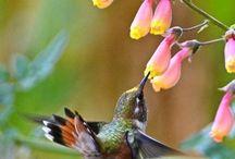 Fiori - Flowers (photo)