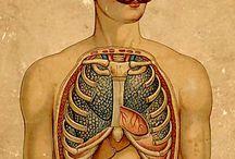 anatomy & biology