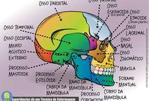 estudos da medicina