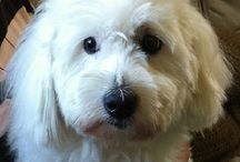 Pet companions / Mine dyrevenner