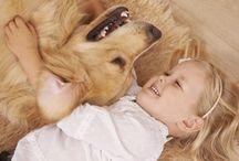 fotos dogs