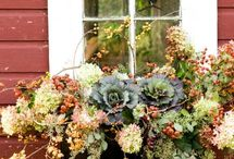 Window Box Perfection / When the best view out of the window is found by looking down! / by WORX Tools