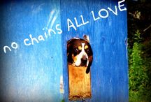 Nova Scotia Dog Rescues / Dog rescues located throughout Nova Scotia.