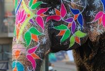 Elephant! (My spirit animal)