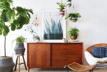 Mid century modern/ plants