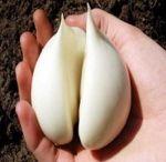 prostată