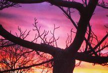 I tramonti  alla Fornacina