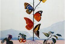Salvador Dali / butterflies