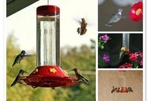 Bird Watching / by Laura Homan
