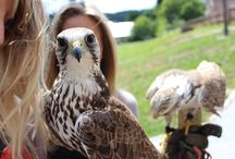 Falconry at our school