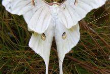 white moth woman