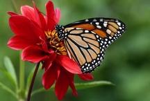 Butterflies and Birds / by Lisa McMillen