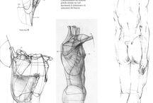 筋肉・骨格 / ドローイングレッスン用参考