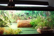 Turtle Terrariums