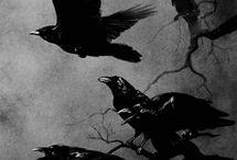 Raven / by . NEVERTRUSTANYONE .