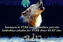 turkum