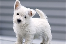 FUR and FLUFF / Small breed dogs -- dogs that I want! -- cute dogs -- adorable puppies and kittens -- pets that I want to own -- rescue dogs -- rescue cats -- short haired cats -- tabby cats