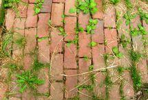 Weeds in gardens