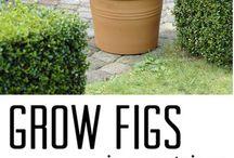 any fruit growin  info