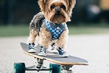 dogs with style..