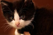 Kitties and cuties