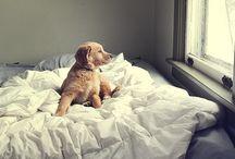 Aranyos Kutyák