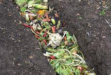 kompost/Odling