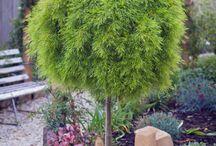 Antoinette Plant Selections
