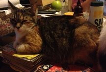 Our Cats  / Pics of our furry family.