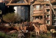 Walt Disneyworld Highlights / Favourites in WDW