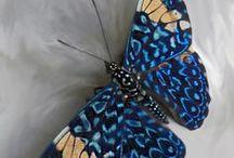 Motýl - Butterfly