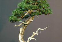Bonsai / Bonsai trees from around the world. How to make a bonsai?