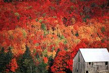 The Most Wonderful Time of the Year / Fall is my Favorite / by Georgi Salisbury Emerson