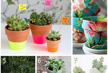 DIY Pot Plant Ideas