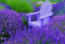 """GARDENING: Garden Beauties / I love gardening and I love flowers and color. Thank you Mother Nature! And """"Thank You"""" to all you talented gardeners out there! / by Blanche Hayden"""