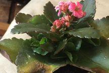 Plantes / Tout les jeudi prise de photo,