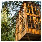 House in the Trees / by findwell