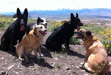 Outdoor Dog Adventures / Dogs outdoors