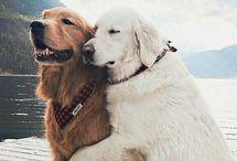 Doggos & Pupperinos