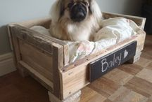 Pampering Your Pet / Creature Comforts
