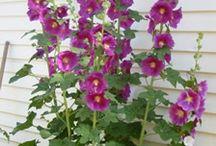 Blumen / Blumen
