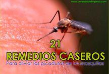 21 REMEDIOS CASEROS PARA LAS PICADURAS DE MOSQUITOS / Sencillas recomendaciones para tratar las molestas picaduras de mosquitos, reducir la comezón y el enrojecimiento y aliviar todos los síntomas.