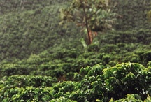 Colombian Coffee Nature