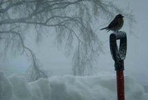 let it snow / by Paula Garcia
