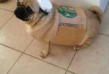 Halloween costumes for doggies / by Regina Nottingham
