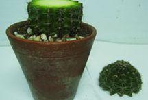 plant.plant