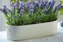Plantas que se podem usar no quarto cama